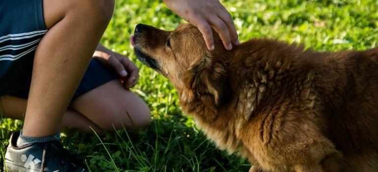 Adoptie honden