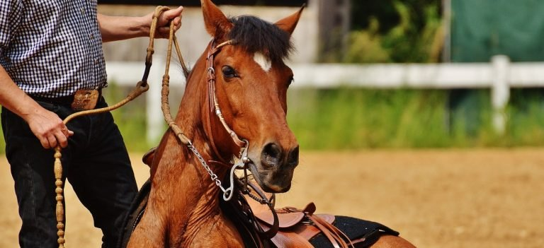 Adoptie paarden