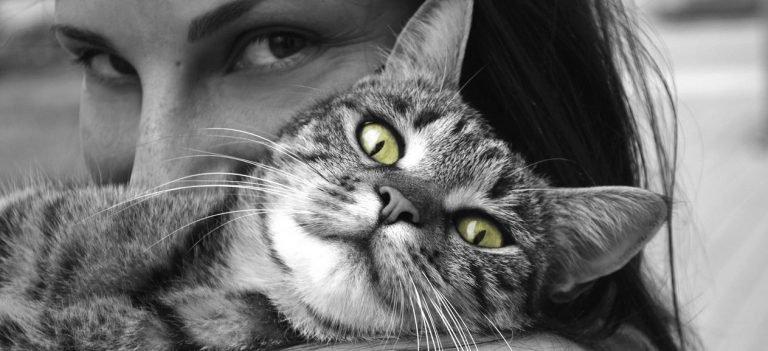 Adoptie katten